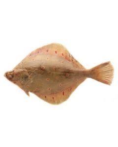 PLAICE (SOLE) FISH - KG