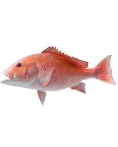ROTBARSH / RED SNAPER FISH - KG
