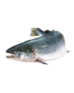 GUTTED SALMON - KG