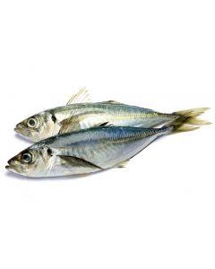 FROZEN MACKEREL FISH - KG